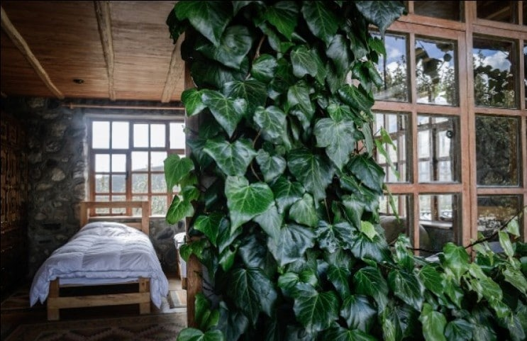 Powerful Plant Medicine: Alex Good on Integrating Ayahuasca Healing with Other Medicinal Plants