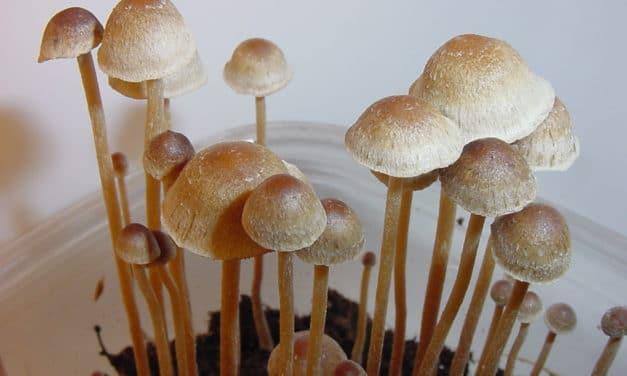 Two Magic Mushroom Studies Suggest Psychedelics Increase Spirituality, Decrease Criminal Behavior