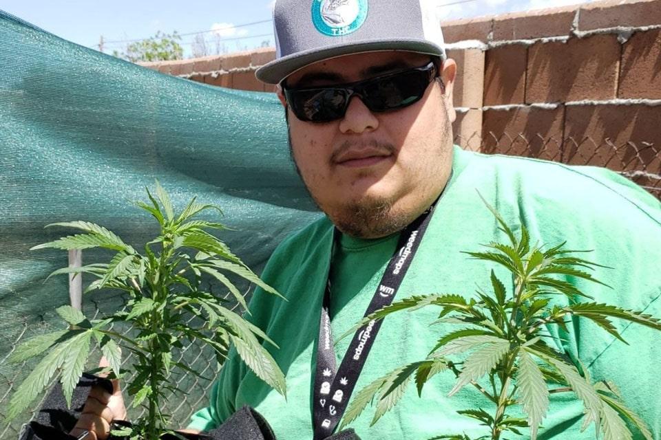 cannabis grows