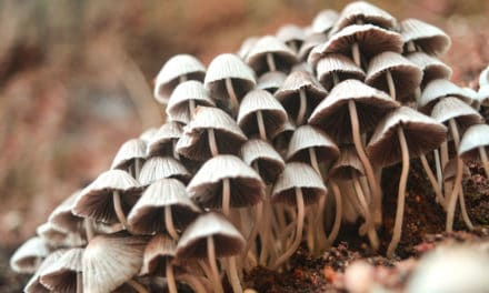 Denver's Psilocybin Policy Panel and the Magic Mushroom Debate