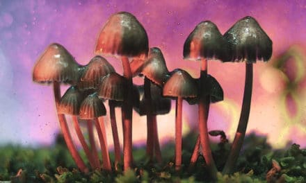 Psilocybin Emerges From the Underground Into the Light: How Will Culture Shift?
