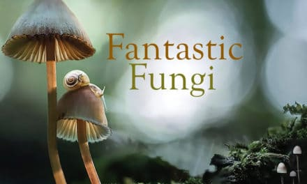 Fantastic Fungi – The Magic Beneath Us: Interview with Filmmaker Louie Schwartzberg