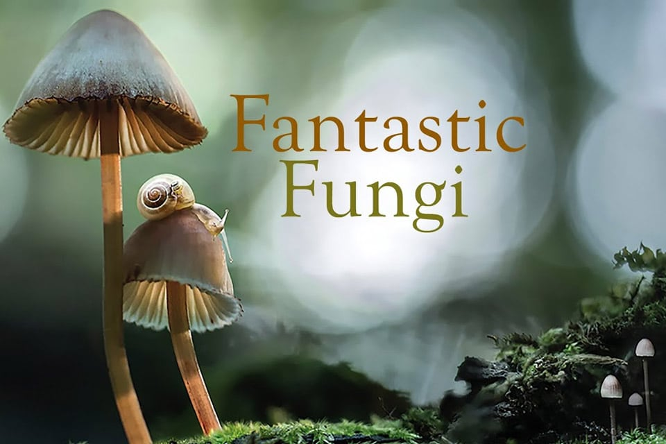 Fantastic Fungi – The Magic Beneath Us: Interview with Filmmaker Louie Schwartzberg
