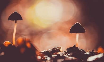 Potentiating Psilocybin: MAOIs and the Entourage Effect
