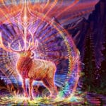 Learning From Animals with Psychedelic Intelligence